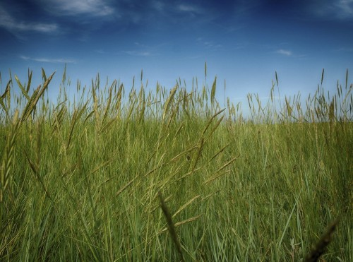 Parting the Grasses